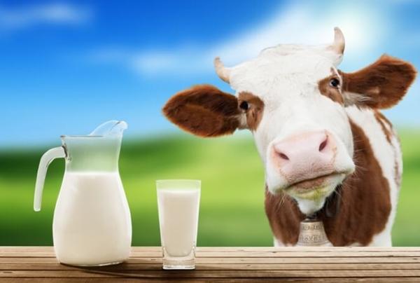 Кальян и молоко