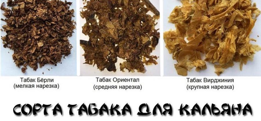Сорта табака для кальяна